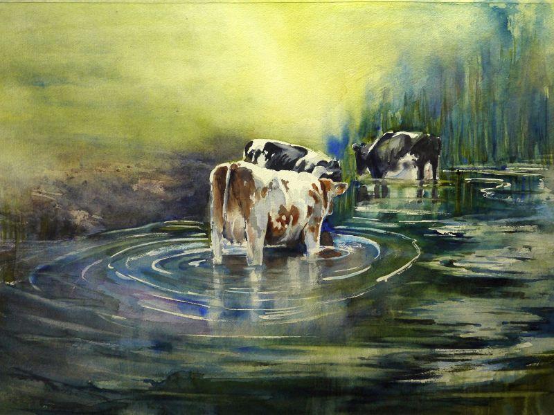 badende-koeien